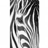 Trendy Panels B & W Wild Wallpanel TDP 6137 50 00 or TDP61375000 By Caselio